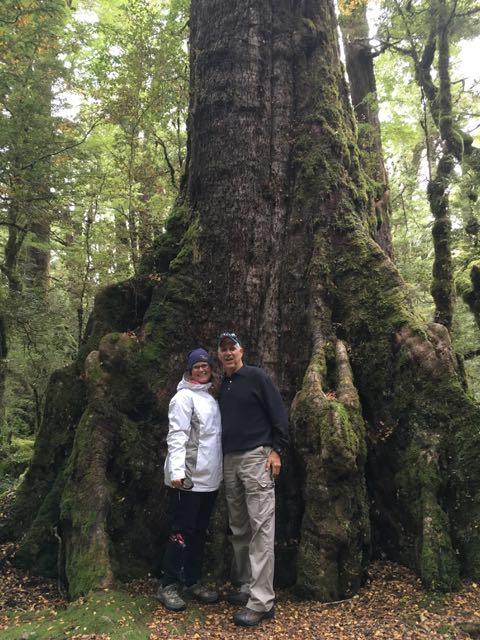 cascade creek trees