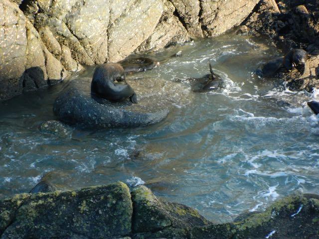 sealcolony