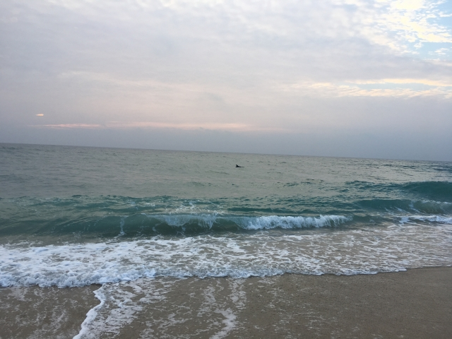 Yuhr-theflyingsquirrelstudio-porpoise