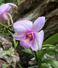 Yuhr-theflyingsquirrelstudio-orchid2