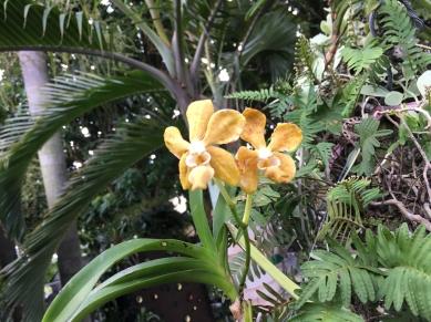 Yuhr-theflyingsquirrelstudio-orchid3