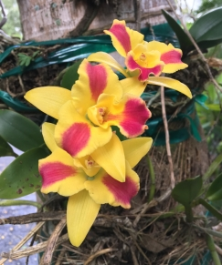Yuhr-theflyingsquirrelstudio-orchid4