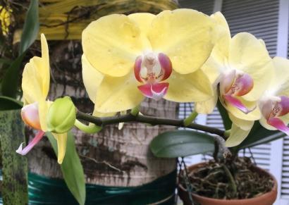 Yuhr-theflyingsquirrelstudio-orchid5