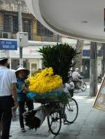 Hanoi-flowers
