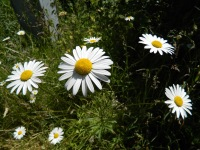 Yuhr-theflyingsquirrelstudio-flowers 2