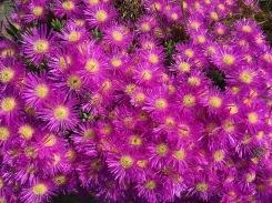 Yuhr-theflyingsquirrelstudio-flowers 4