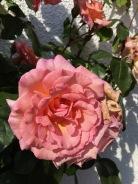Yuhr-theflyingsquirrelstudio-flowers 5