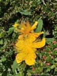Yuhr-theflyingsquirrelstudio-flowers 7